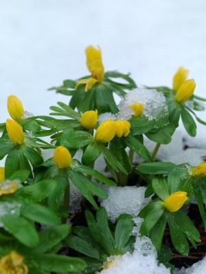 wpid7146-Tough-Winter-Flowers-BERA008-nicola-stocken.jpg