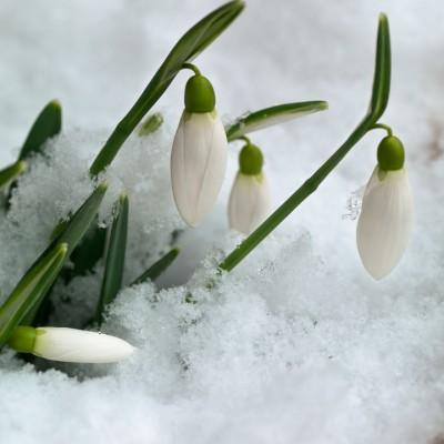 wpid7148-Tough-Winter-Flowers-BGAL244-nicola-stocken.jpg