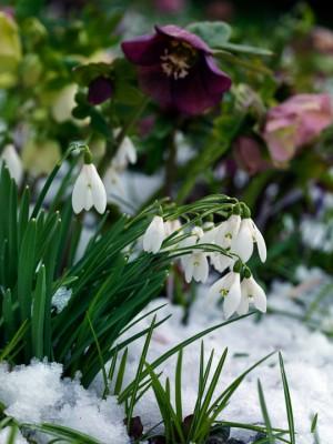 wpid7150-Tough-Winter-Flowers-BGAL255-nicola-stocken.jpg