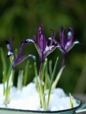 wpid7154-Tough-Winter-Flowers-BIRI224-nicola-stocken.jpg