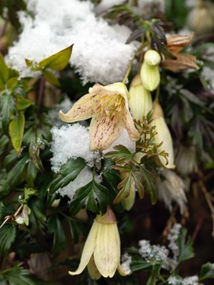 wpid7158-Tough-Winter-Flowers-CCLE282-nicola-stocken.jpg