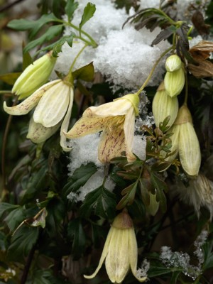 wpid7160-Tough-Winter-Flowers-CCLE284-nicola-stocken.jpg