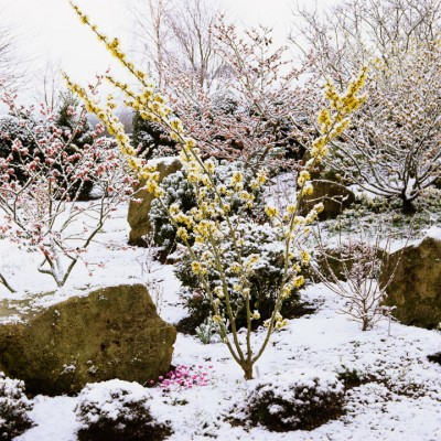 wpid7162-Tough-Winter-Flowers-GASH046-nicola-stocken.jpg