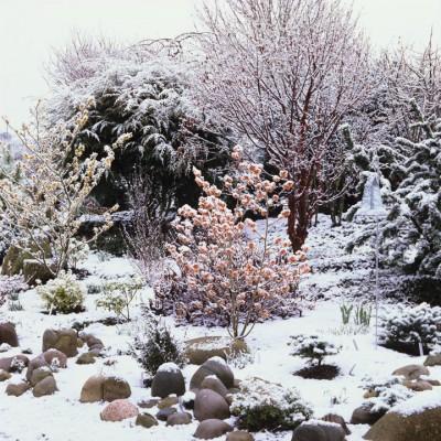 wpid7164-Tough-Winter-Flowers-GASH047-nicola-stocken.jpg