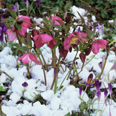 wpid7166-Tough-Winter-Flowers-PHEL157-nicola-stocken.jpg