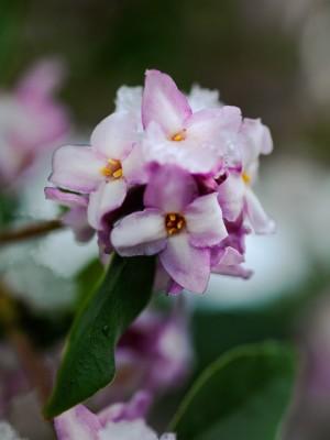 wpid7190-Tough-Winter-Flowers-SDAP026-nicola-stocken.jpg