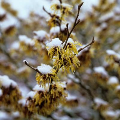 wpid7194-Tough-Winter-Flowers-SHAM078-nicola-stocken.jpg