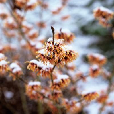 wpid7196-Tough-Winter-Flowers-SHAM079-nicola-stocken.jpg