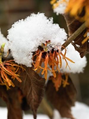 wpid7198-Tough-Winter-Flowers-SHAM120-nicola-stocken.jpg