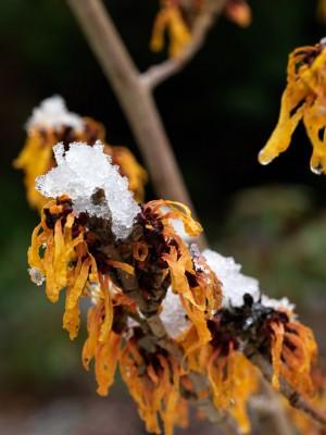 wpid7200-Tough-Winter-Flowers-SHAM121-nicola-stocken.jpg