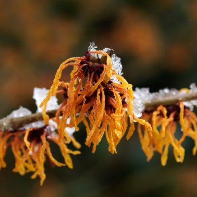 wpid7202-Tough-Winter-Flowers-SHAM123-nicola-stocken.jpg