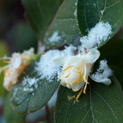 wpid7206-Tough-Winter-Flowers-SLON011-nicola-stocken.jpg