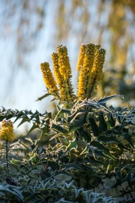 wpid7208-Tough-Winter-Flowers-SMAH017-nicola-stocken.jpg