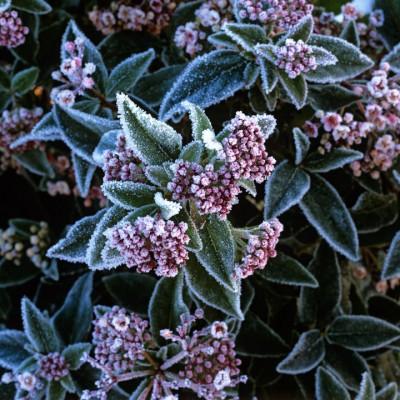 wpid7220-Tough-Winter-Flowers-SVIB024-nicola-stocken.jpg