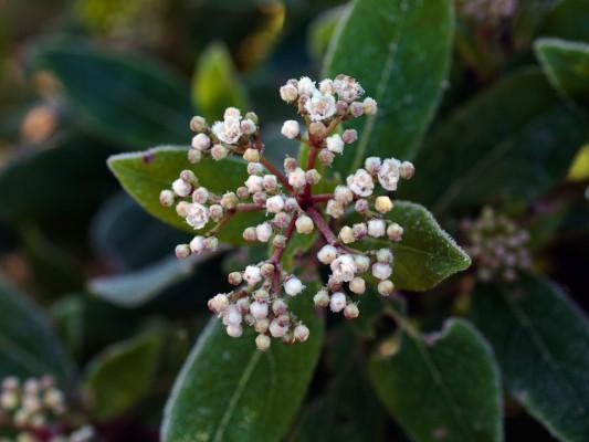 wpid7224-Tough-Winter-Flowers-SVIB037-nicola-stocken.jpg