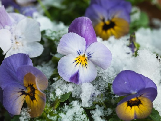 wpid7228-Tough-Winter-Flowers-XVIO016-nicola-stocken.jpg