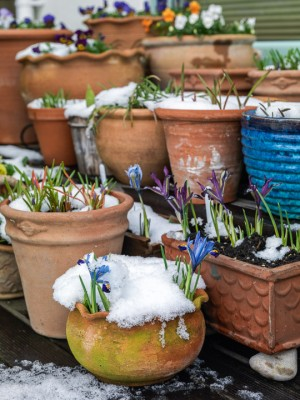 wpid7626-Winter-Pots-GOCK159-nicola-stocken.jpg
