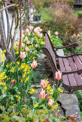 wpid7708-Daffodil-Plant-Profile-GHOL036-nicola-stocken.jpg