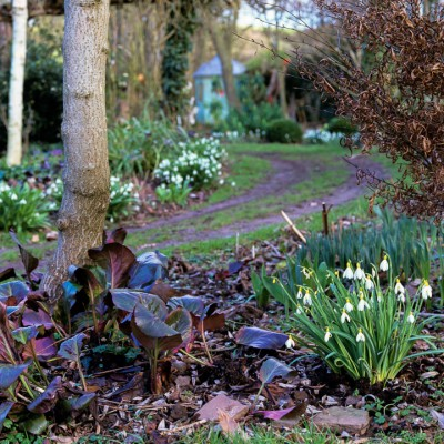 wpid7990-Snowdrops-whats-in-a-name-GLOW027-nicola-stocken.jpg