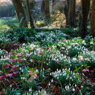wpid7992-Snowdrops-whats-in-a-name-GPEM008-nicola-stocken.jpg