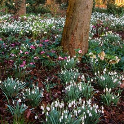 wpid7994-Snowdrops-whats-in-a-name-GPEM014-nicola-stocken.jpg
