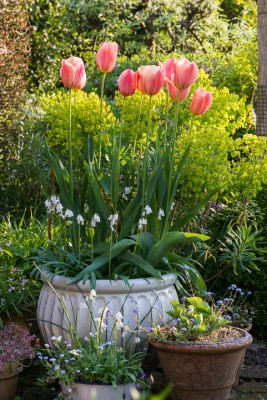 wpid8064-Spring-containers-GBRI033-nicola-stocken.jpg
