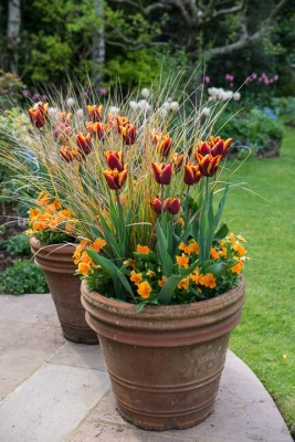 wpid8074-Spring-containers-GHOY022-nicola-stocken.jpg