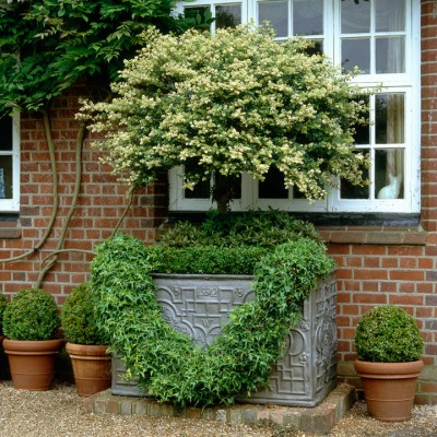 wpid8664-Topiary-For-All-Seasons-ACON078-nicola-stocken.jpg