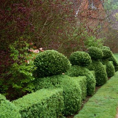 wpid8666-Topiary-For-All-Seasons-AHED012-nicola-stocken.jpg