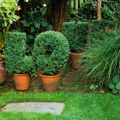 wpid8674-Topiary-For-All-Seasons-DTOP013-nicola-stocken.jpg
