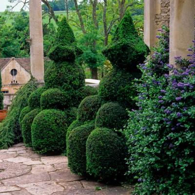 wpid8676-Topiary-For-All-Seasons-DTOP015-nicola-stocken.jpg