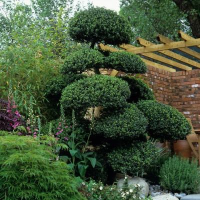 wpid8682-Topiary-For-All-Seasons-DTOP039-nicola-stocken.jpg