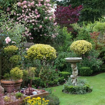 wpid8684-Topiary-For-All-Seasons-DTOP047-nicola-stocken.jpg
