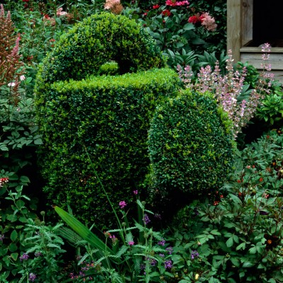 wpid8690-Topiary-For-All-Seasons-GRUS007-nicola-stocken.jpg