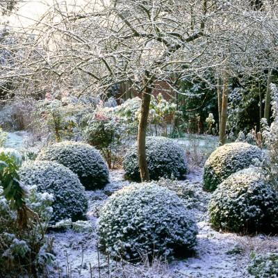 wpid8694-Topiary-For-All-Seasons-FWIN106-nicola-stocken.jpg