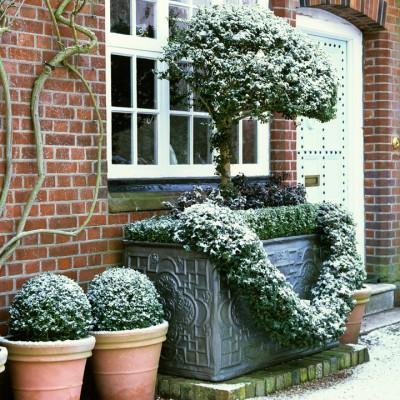 wpid8696-Topiary-For-All-Seasons-FWIN118-nicola-stocken.jpg