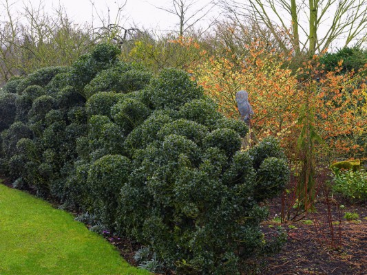 wpid8698-Topiary-For-All-Seasons-GASH061-nicola-stocken.jpg