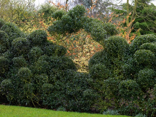 wpid8700-Topiary-For-All-Seasons-GASH062-nicola-stocken.jpg