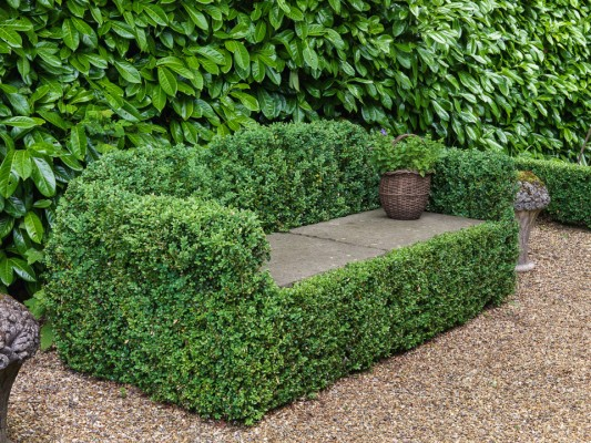 wpid8712-Topiary-For-All-Seasons-GKIM043-nicola-stocken.jpg