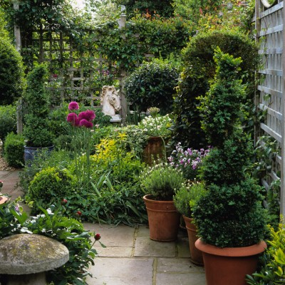 wpid8714-Topiary-For-All-Seasons-GLIN043-nicola-stocken.jpg