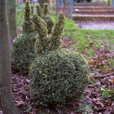 wpid8722-Topiary-For-All-Seasons-GLOW030-nicola-stocken.jpg
