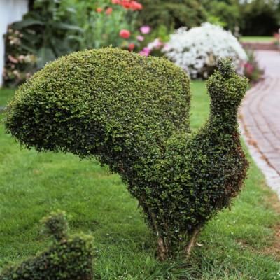 wpid8734-Topiary-For-All-Seasons-GPEL021-nicola-stocken.jpg