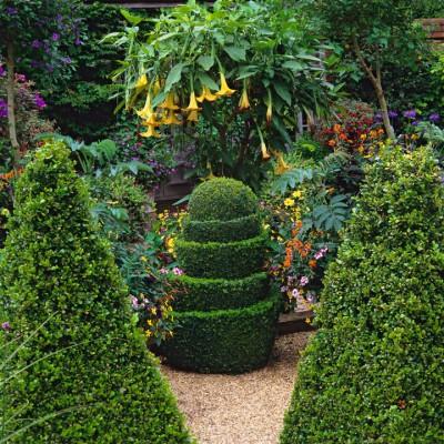 wpid8742-Topiary-For-All-Seasons-GRUS037-nicola-stocken.jpg