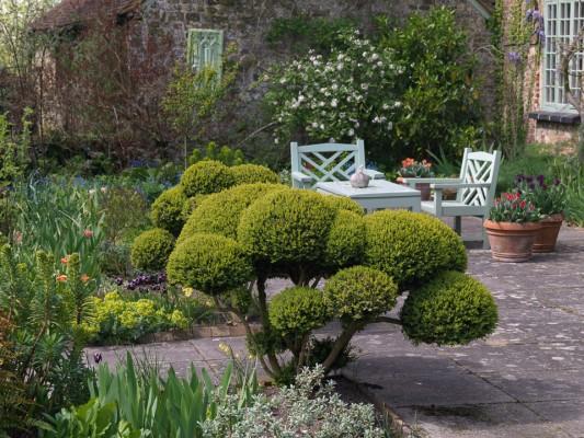 wpid8744-Topiary-For-All-Seasons-GSAN006-nicola-stocken.jpg
