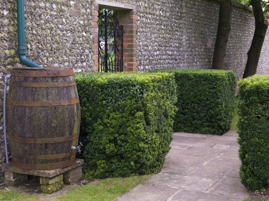 wpid8748-Topiary-For-All-Seasons-GSEL040-nicola-stocken.jpg