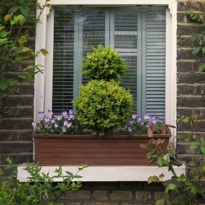 wpid8750-Topiary-For-All-Seasons-GSIB124-nicola-stocken.jpg
