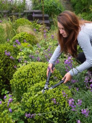 wpid8762-Topiary-For-All-Seasons-QPRA006-nicola-stocken.jpg