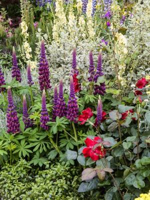 wpid8873-Colour-in-the-Garden-DESI079-nicola-stocken.jpg