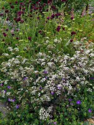wpid8891-Colour-in-the-Garden-DESI514-nicola-stocken.jpg