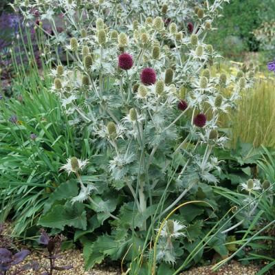 wpid8906-Colour-in-the-Garden-DGRA058-nicola-stocken.jpg